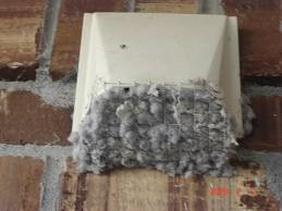 dryer vent on home that is clogged with lint